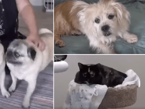 New old age care home opens that's just for elderly cats and dogs