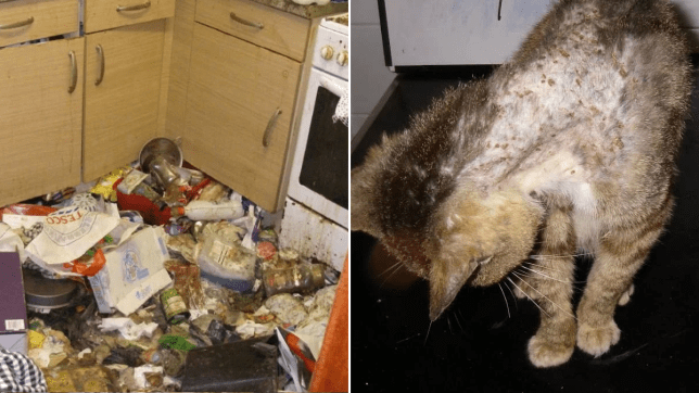 Horrifying pictures reveal the filthy conditions pets were kept in by owner
