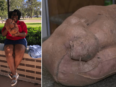 Gardener grows gigantic sweet potato then names it Patricia