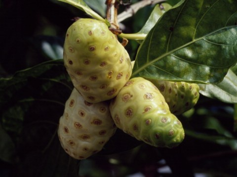 What is vomit fruit, as seen on I'm A Celebrity?