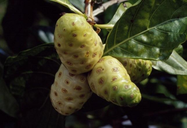 'Vomit' Fruit