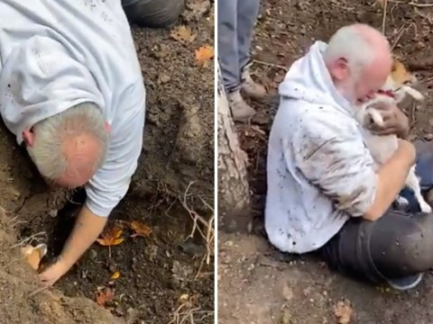 Owner breaks down as missing dog is found in fox hole