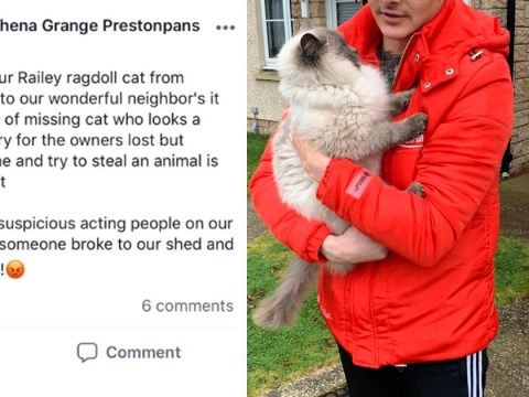 Well-meaning couple thought they'd rescued friend's missing cat – ended up accidentally 'stealing' someone else's