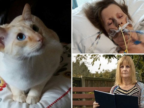 Woman, 65, left in coma after her 'spiteful' Siamese cat scratched her