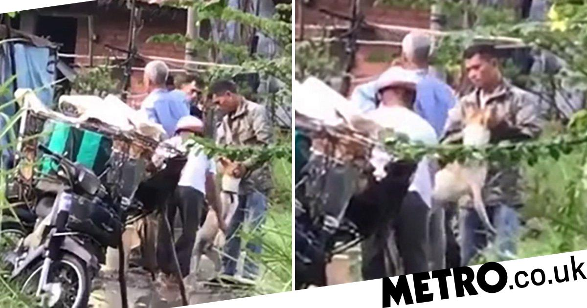 Dog pinned down and 'force fed drain water' so it can be sold for meat