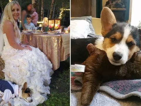 Bridesmaids surprise bride with a puppy as a wedding gift after her dog died