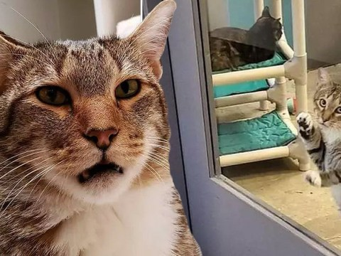 Quilty the cat is locked up in solitary confinement because he keeps letting other shelter animals out