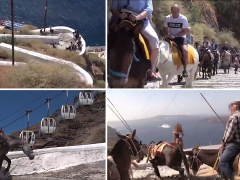 Abused donkeys are still having to carry fat tourists up famous staircase
