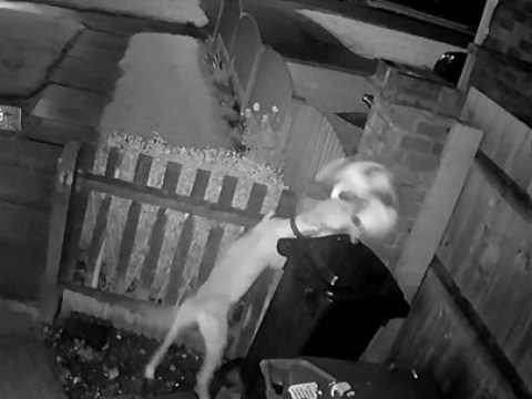 Thug caught on CCTV urging his dog to maul a cat to death is jailed