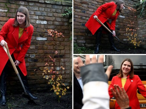 Tories and Lib Dems try one up each other with tree planting pledges