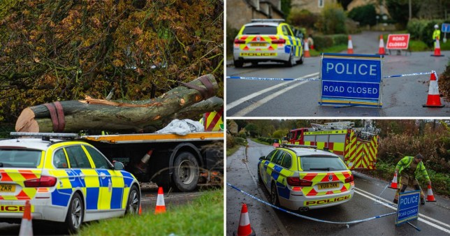 Two people have died when a fallen tree landed on their car (picture: SWNS)