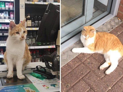 Customers boycott Tesco store after it banned Pumpkin the cat
