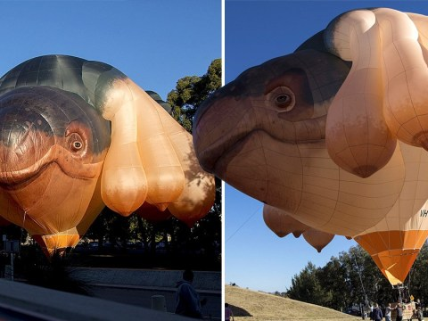 Skywhale, Australia's hot air balloon with 10 breasts, is no longer flying solo