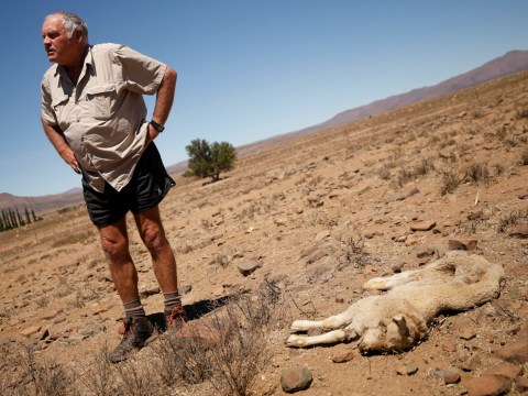 Animals dying in South African town facing worst drought in over a century