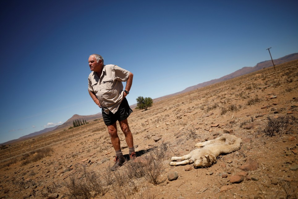 Farmer Gerrie Snyman stands over a dead lamb on his farm near drought-stricken Graaff-Reinet, South Africa, November 16, 2019. Picture taken November 16, 2019. REUTERS/Mike Hutchings
