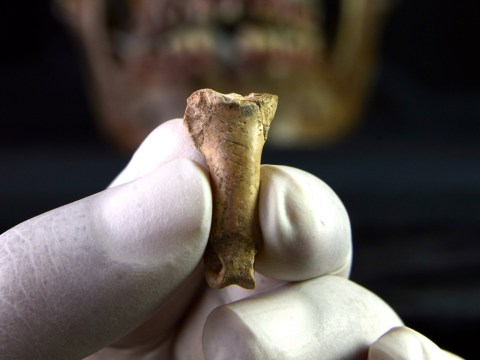 Unearthed eagle bone believed to be a Neanderthal necklace