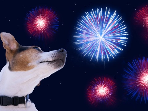 Happy Bonfire Night: How to keep pets safe on Guy Fawkes Night