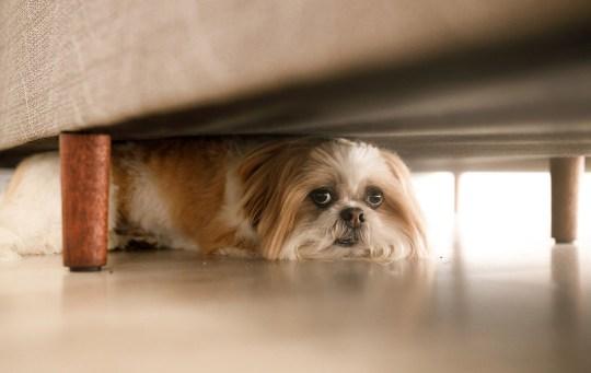 Dog hidden.