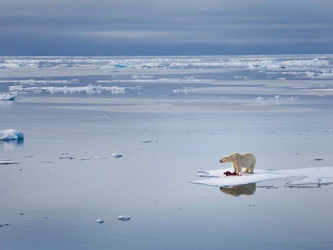 Climate change is killing polar bears and it's an ominous 'harbinger of the future', Nasa warns