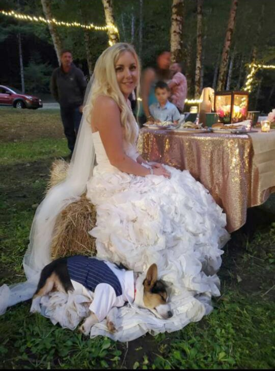 Kaci Shepard Myers with Ten-week-old Corgi on her wedding day