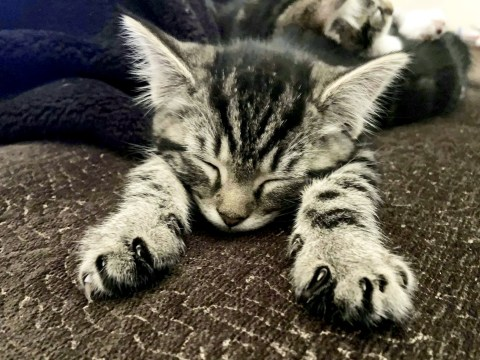 Missing kitten found decapitated by heartbroken owner