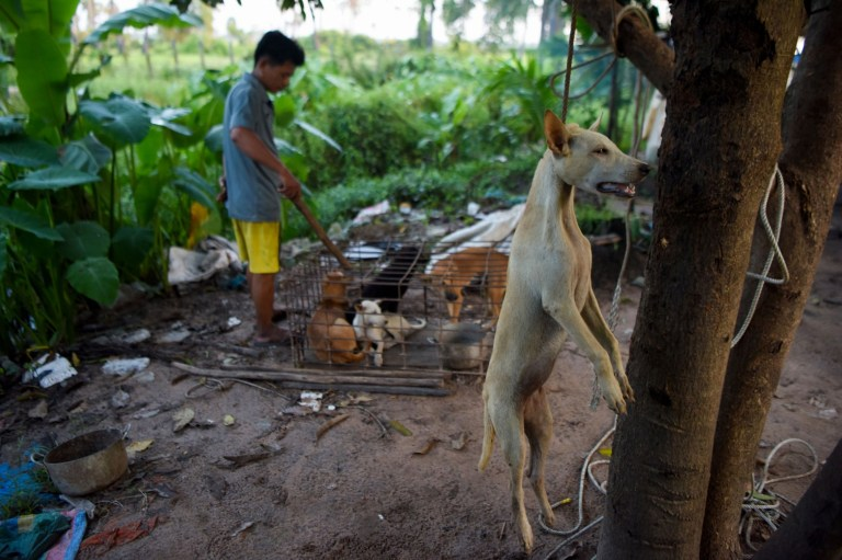 EDITORS NOTE: Graphic content / This photo taken on October 25, 2019 shows a dog that was hung as a man looks at dogs in a cage at a slaughterhouse in Siem Reap province. - Cambodian dog meat traders drown, strangle and stab thousands of canines a day in a shadowy but sprawling business that traumatises workers and exposes them to deadly health risks like rabies. (Photo by TANG CHHIN Sothy / AFP) / TO GO WITH Cambodia-animal-dog-food, FEATURE by Joe FREEMAN and Suy SE (Photo by TANG CHHIN SOTHY/AFP via Getty Images)