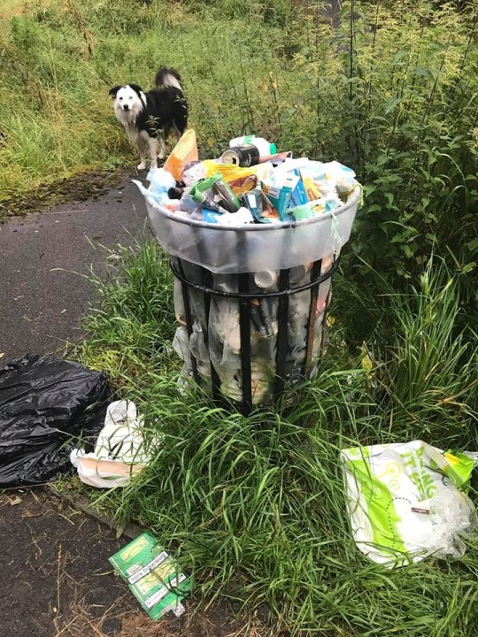 A border collie is helping clean up the world by LITTER PICKING on his walkies. Litter-picking pooch Stan is on a mission as he sniffs out dropped rubbish while on country walks. Owner Kate Oakes, 48, takes six-year-old Stan (PICTURED) out every day where the pair collect dumped litter from beauty spots. ? WALES NEWS SERVICE