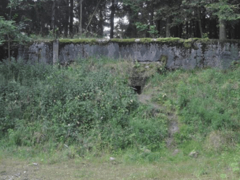 Cannibal ants escape Soviet nuclear weapons bunker