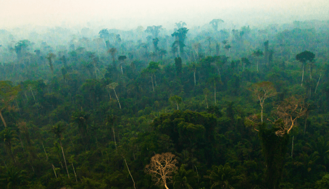 Study warns that the rainforest's ability to absorb greenhouse gases could be reduced by the drying process (Image: Nasa)