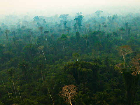 The Amazon rainforest is drying out and could be vulnerable to cataclysmic wildfires, Nasa reveals