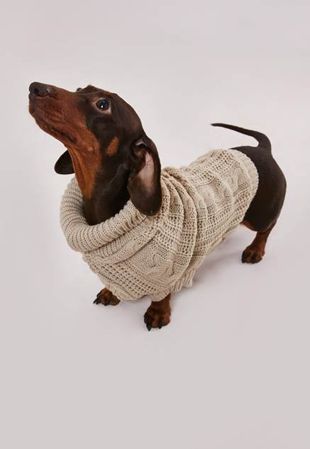 dog wearing camel missguided jumper