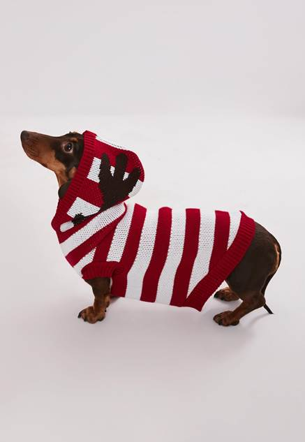 dog wearing missguided festive jumper