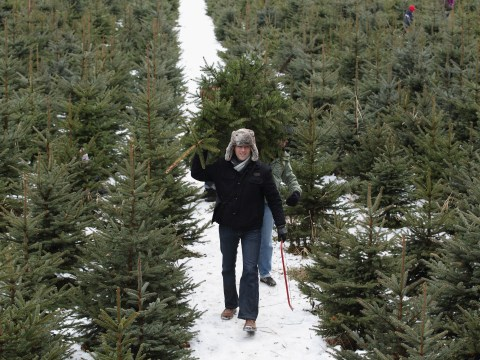 How long does a Christmas tree take to grow?