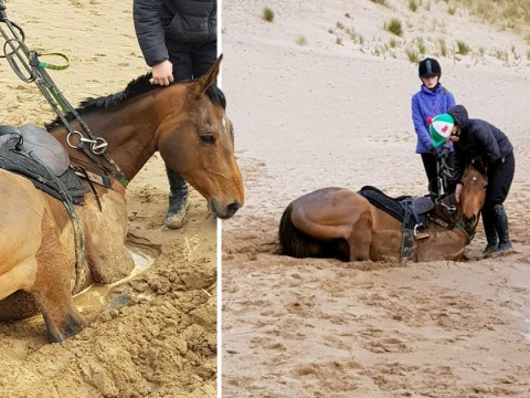 Horses rescued after 'disappearing' in quicksand on Welsh beach