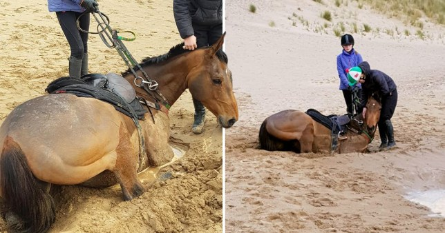 Two ponies were desperately pulled from quicksand after they were trapped up to their necks on seaside walk (Picture: Facebook)
