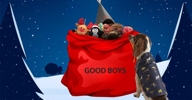 A dog sat in a Fetch rain coat in front of a Santa sack that says 'good boys' and is filled with toys with a festive blue background