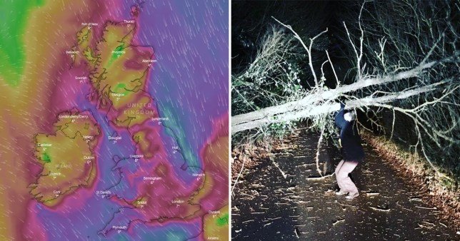 Met Office weather forecast and tree knocked over by Storm Atiyah