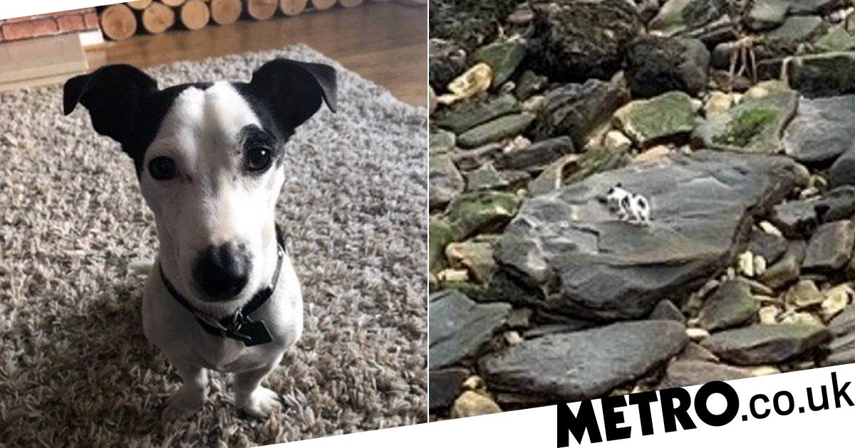 Jack Russell survives falling 40ft off a cliff with no major injuries