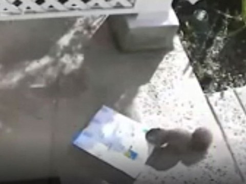 Squirrel porch pirate steals package left at front door