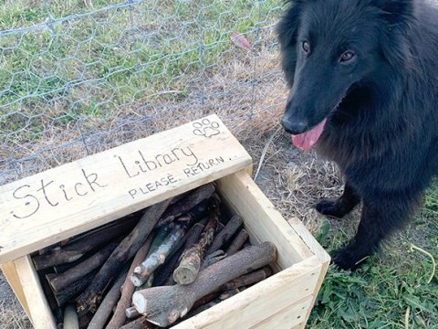 Dad creates 'stick library' for dogs