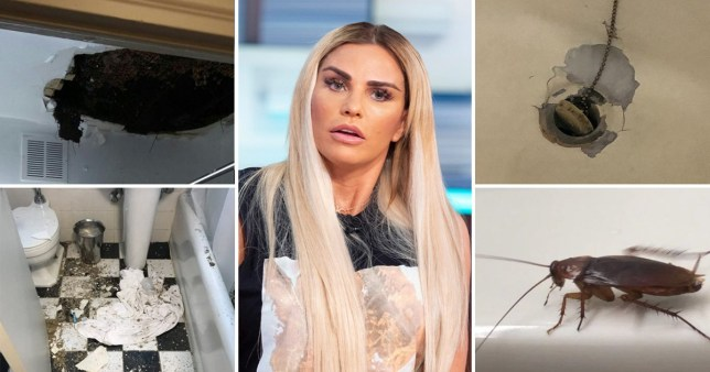 Inside Katie Price's New York hotel as guests complain of 'cockroach infestation and mould'
