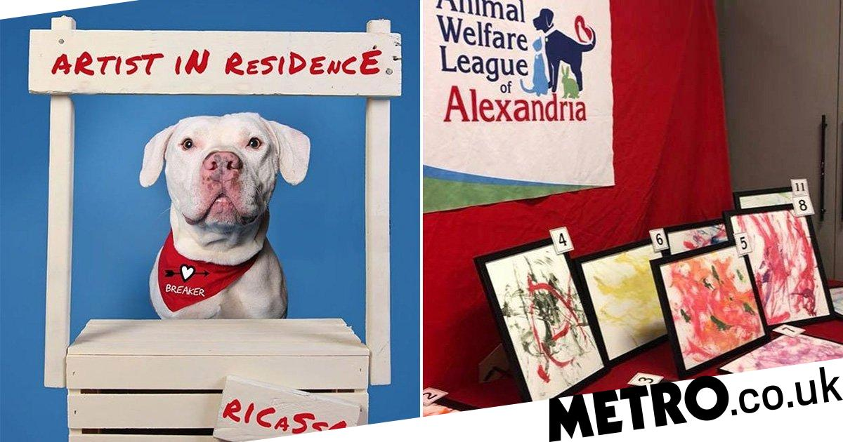 Shelter dog nicknamed Ricasso earns £3k after his paintings are sold