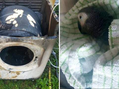 Heartbroken dad says Hotpoint tumble dryer fire killed his parrot