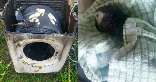 Marlon the parrot died after the Hotpoint tumble dryer set on fire