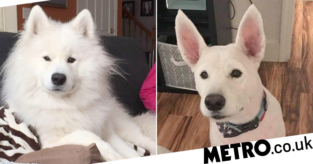 Dog looks so different after grooming owner doesn't recognise him