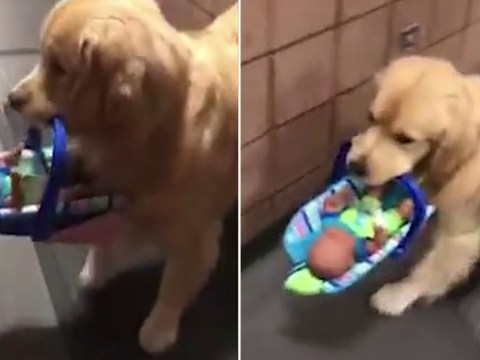 Police therapy dog steals and hides all the toys donated for kids