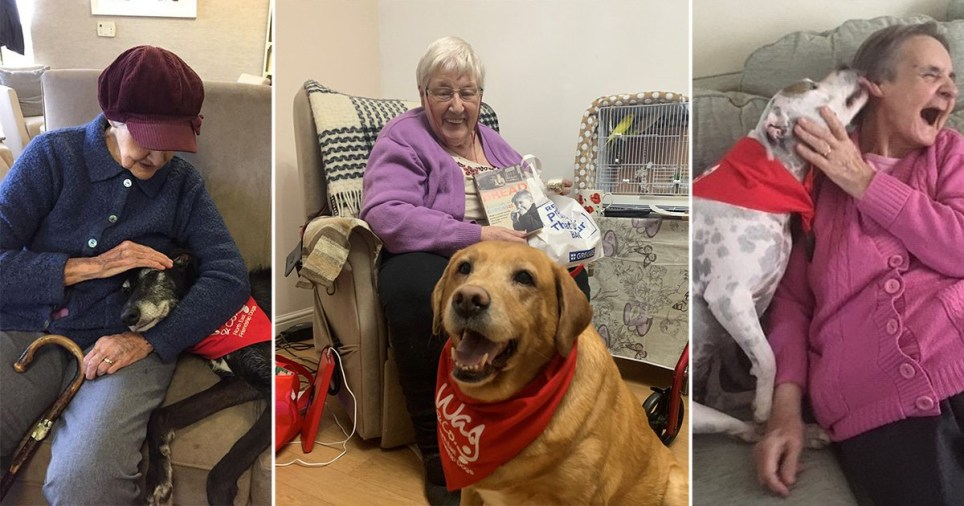A 'Friendship dog' service is offering a bold solution to combat loneliness in the north east (Picture: Wag and Company)