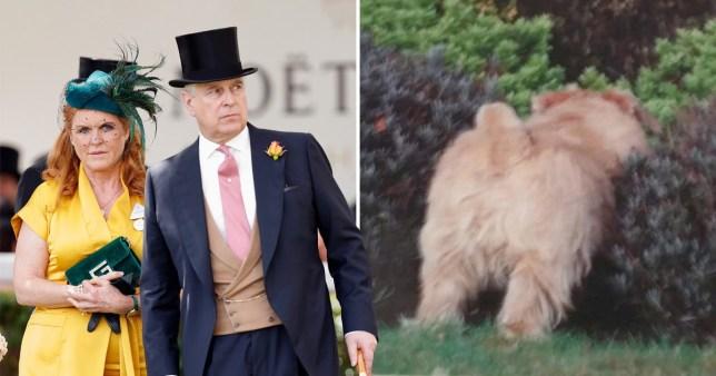Prince Andrew bids farewell to 2019 with dog's backside Christmas card