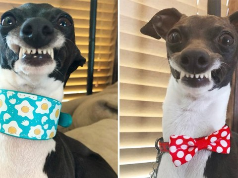 Penelope the dog wins fans for her ridiculous smile