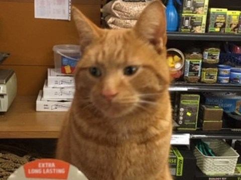 Meet Boris, the shopkeeper cat frequenting every store on the high street